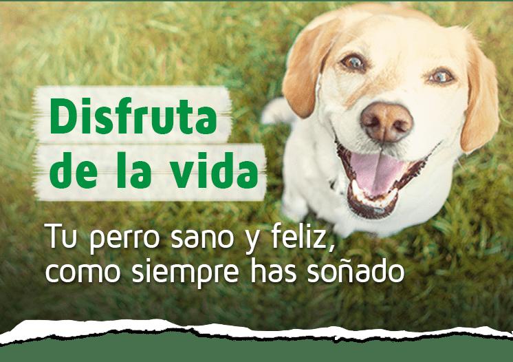 Piensos Y Complementos Naturales Para Perros Laravital